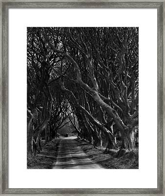 Scary Pathway Framed Print by David McFarland