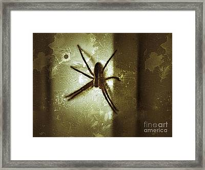 Scary Spider Framed Print by Christy Bruna
