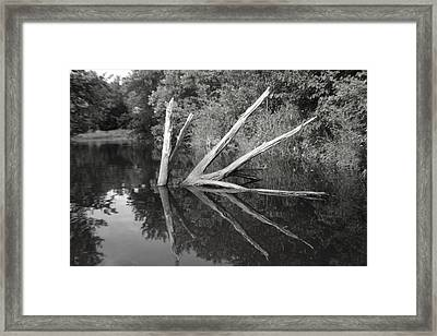 Scenes From The Kayak    Downed Trees Of The Ec River Back Waters Framed Print by Artist Orange