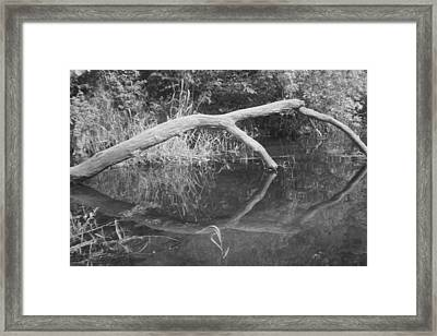 Scenes From The Kayak.   Downed Trees Of The Ec River Back Waters Part 2 Framed Print by Artist Orange