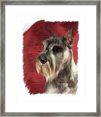 Schnauzer 381 Framed Print by Larry Matthews
