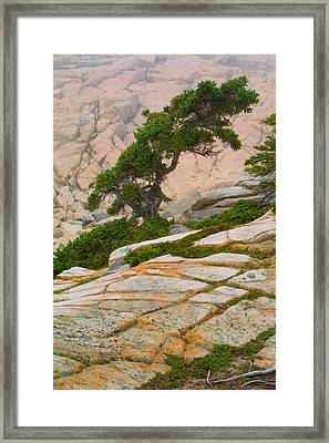 Framed Print featuring the photograph Schoodic Cliffs by Brent L Ander