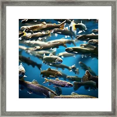 School Of Fish Framed Print by by Jun Aviles