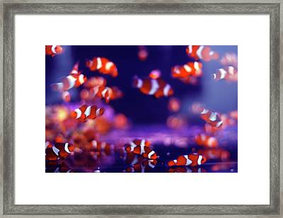 School Of Fish Framed Print by Yuki Crawford