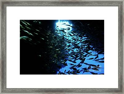 School Of Glass Fish In An Underwater Cave Framed Print