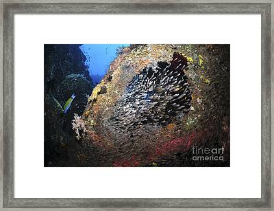 School Of Sweeper Glass Fish On Liberty Framed Print