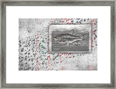 Schools 1 Framed Print by Carol Leigh