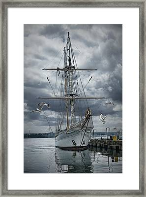 Schooner In Halifax Harbor Framed Print by Randall Nyhof