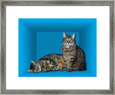 Schrodinger's Cat, Artwork Framed Print
