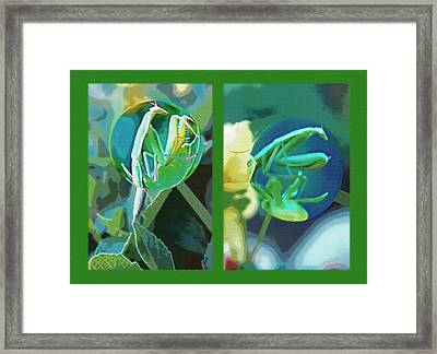 Science Class Diptych - Praying Mantis Framed Print by Steve Ohlsen