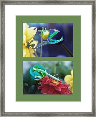 Science Class Diptych 2 - Praying Mantis Framed Print by Steve Ohlsen