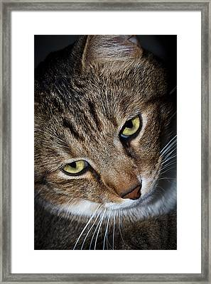 Scooter Framed Print by Doug Long