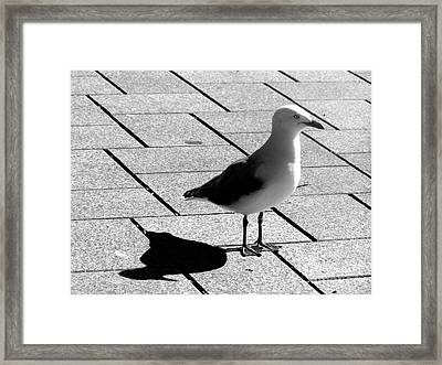 Scoping The Place   Framed Print