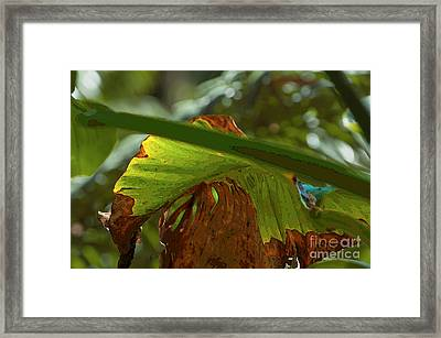 Scorched Ear Framed Print