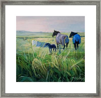 Scotland Fields Framed Print