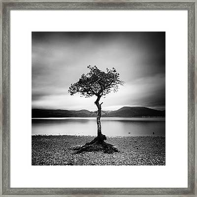 Scotland Milarrochy Tree Framed Print