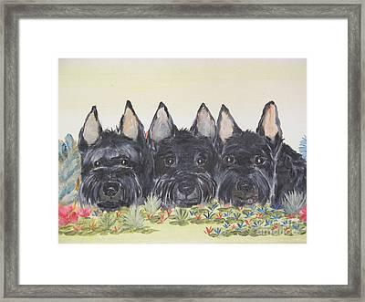 Scottish Gardeners Framed Print by Rachel Carmichael