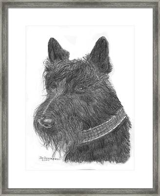 Scottish Terrier Framed Print by Jim Hubbard
