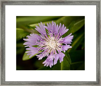 Scott's Astor Framed Print by Michael Putnam