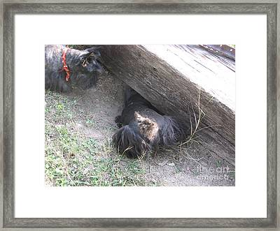 Scotty Armadillo Dance Framed Print