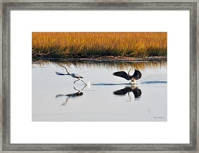 Scram Framed Print by Kay Lovingood