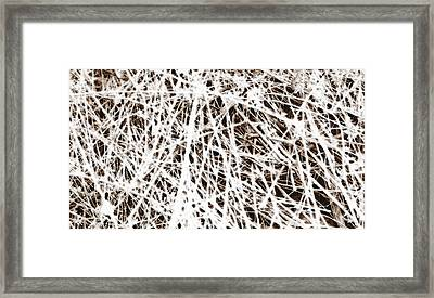 Framed Print featuring the photograph Scratch by Lenny Carter