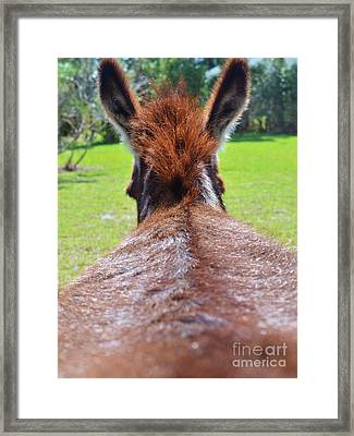Scratch My Ass Framed Print