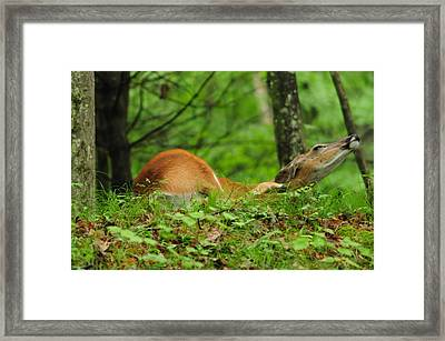 Scratching An Itch Framed Print by Mike Martin
