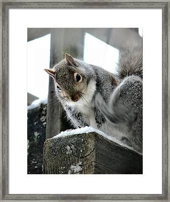 Scratching An Itch Framed Print by Rory Sagner