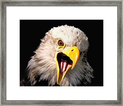 Screaming Eagle II Black Framed Print