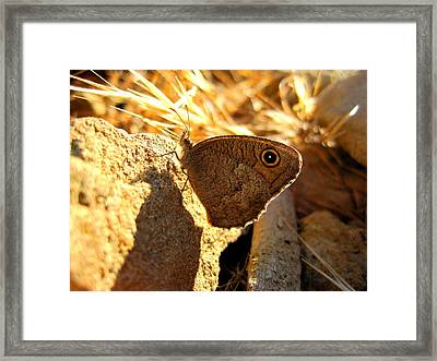 Scruffy Framed Print by Catherine Natalia  Roche