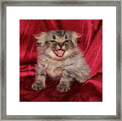 Scruffy Fold 2011 2 Framed Print by Robert Morin