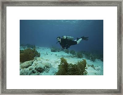 Scuba Diver Swimming Underwater Framed Print