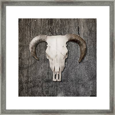 Scull Framed Print by Stephen Walker