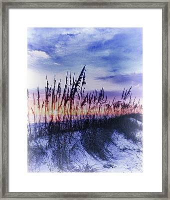 Se Oats 2 Framed Print by Skip Nall