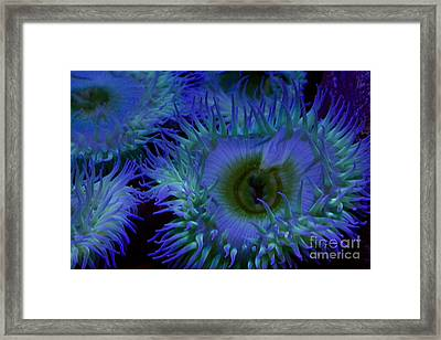 Sea Anemone Framed Print by Xn Tyler