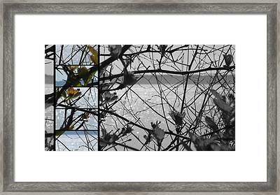 Sea Beyond The Branches Framed Print by Lee Yang
