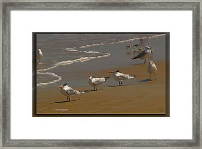 Sand And Sea Birds Framed Print by Barbara Middleton