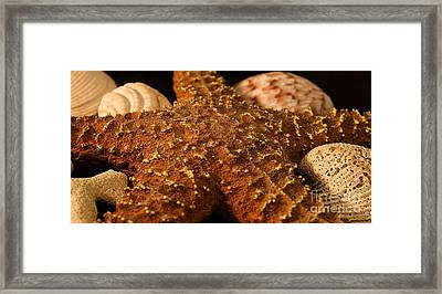 Sea Creatures Framed Print by Milena Ilieva