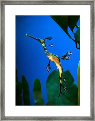 Sea Dragon Framed Print by Anna Rumiantseva