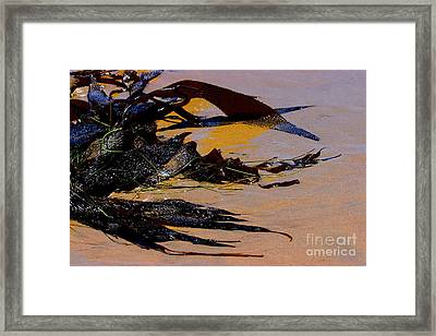 Pismo Beach Sea Drift Framed Print