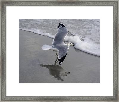 Sea Gull By The Sea Shore Framed Print by Paulette Thomas