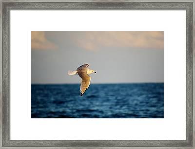Sea Gull Over The Ocean Framed Print by Paulette Thomas