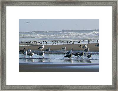 Sea Gulls And Breakers Framed Print by Pamela Patch