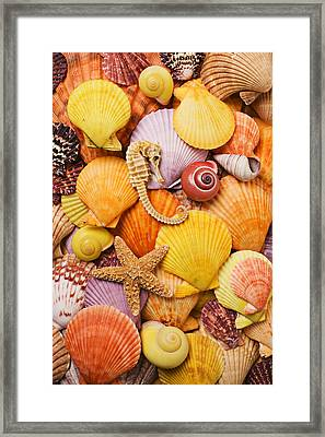 Sea Horse Starfish And Seashells  Framed Print