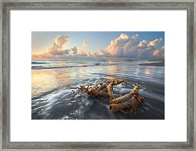 Sea Jewel Framed Print