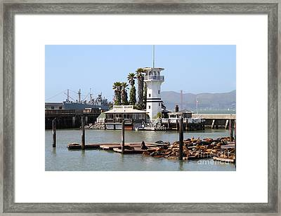 Sea Lions At Pier 39 San Francisco California . 7d14294 Framed Print by Wingsdomain Art and Photography