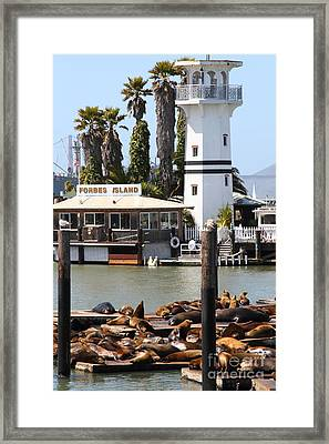 Sea Lions At Pier 39 San Francisco California . 7d14296 Framed Print by Wingsdomain Art and Photography