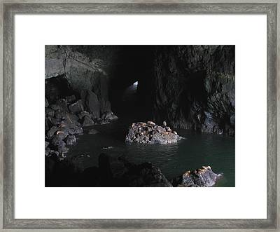 Sea Lions Cave 2 Framed Print by Kathy Long