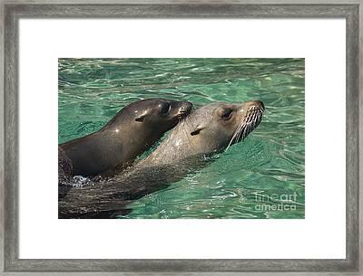 Sea Lions Framed Print by Raul Gonzalez Perez